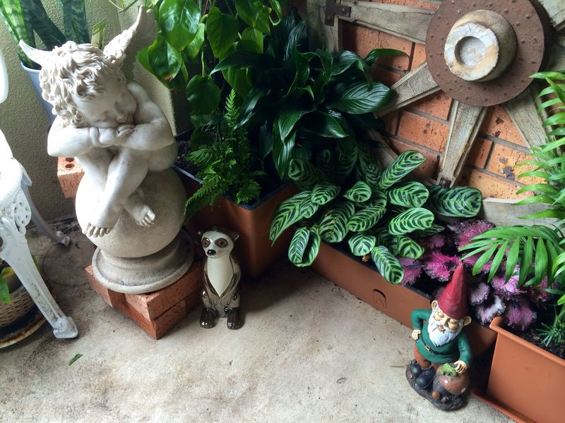 Gnome_Cupid_Meerkat_In_Gypsy_Garden